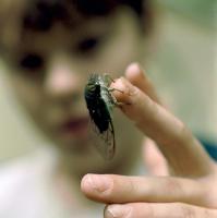 Boy_with_Cicada